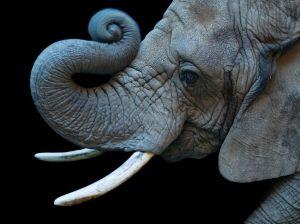 elephant-zoo-colorado-sartore_72058_990x742