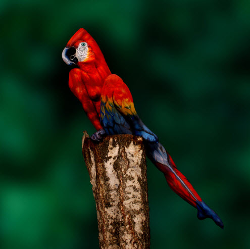 Oiseau moqueur