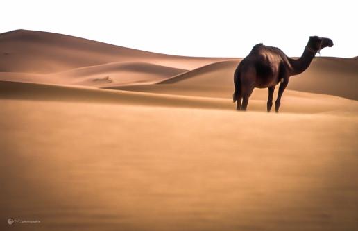 Maroc 1994_MADphotographie_05