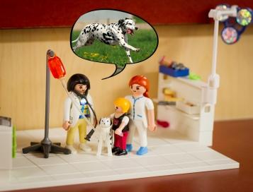 4_chien traité