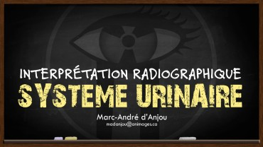 TEMPLATE-DIAPO-TITRE ANIMAGES 2017_radio urinaire